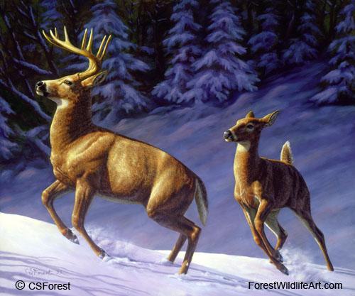 Forest Wildlife Art Whitetail Deer
