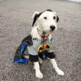 WonderCon Anaheim 2015 Bat Dog
