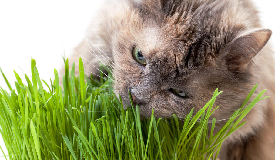 Cat munching some grass