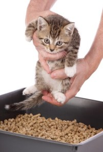 Kitten inside a litter tray