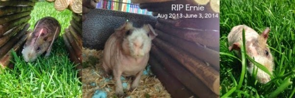 https://www.foreverinmomgenes.com/2014/06/when-pet-dies.html