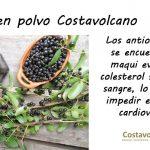 Beneficios del consumo de Maqui Costavolcano