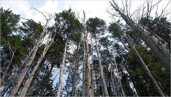 Report: Old-Growth Forests Dying Off