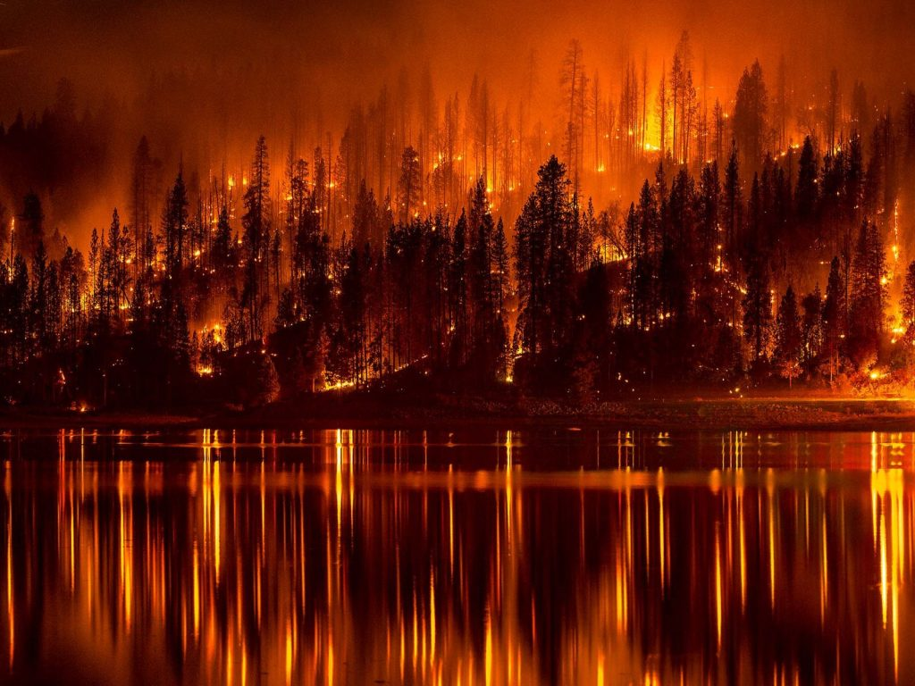 Forest Management and Fires