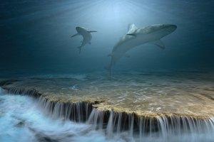 3D Waterlife Wallpaper