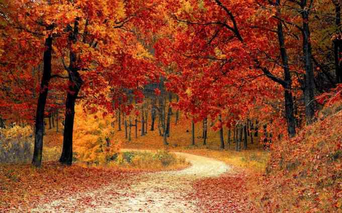 Autumn HD wallpaper