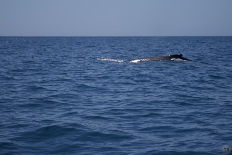 First whale sighting