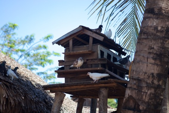 An unexpected pidgon house