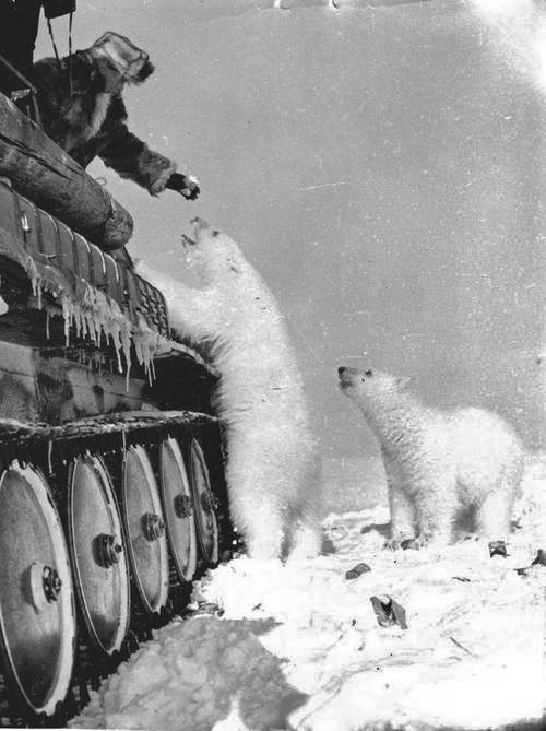 Feeding bears from a tank