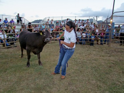 4-H member Kira Pimental brought her 1,033-lb. steer to auction at the 2011 Fair.