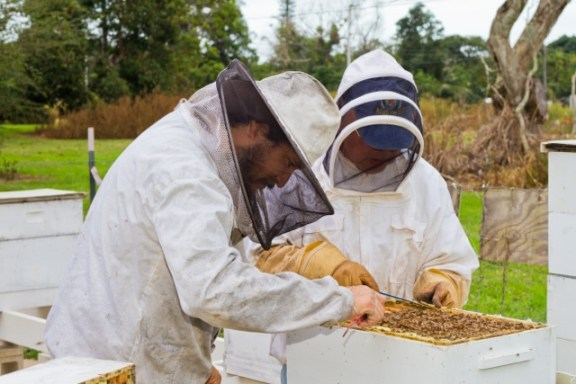 Jimmy Trujillo of the Kaua`i Beekeeper's Assn. (l) and Dr. Francis Takahashi investigate bees at the Kaua`i Community College apiary