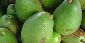 avocadoes-640x325