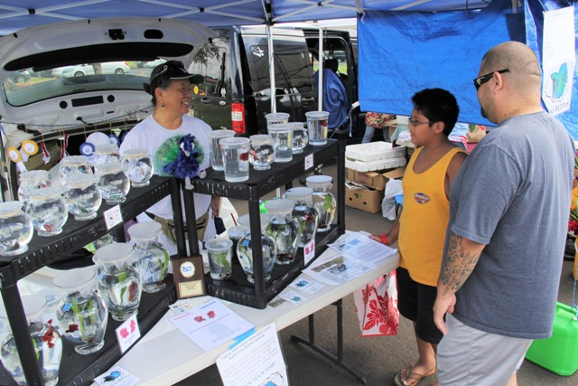 Children, with their parents in tow, are mesmerized by the assorted colors of betta fish that Liz Hahn sells at Kaua'i Community College market each Saturday morning. Here she is seen explaining to a customer how to take care of the fish.