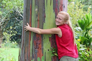 The Mindanao gum tree, also known as rainbow eucalyptus, has a unique multi-hued bark. Patches of outer bark shed at different times, showing a bright green inner bark. This then darkens and matures, developing blue, purple, orange and maroon tones. The tree hugged by Halli Holmgren is part of a small forest up at Wailua Arboretum.