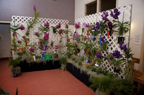 2014 Annual Spring Fantasy Orchid Show. Photo by Ryan Metzger