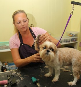 Coco had a full spa session at The Sandy Dog for the first time last month.