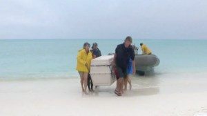 The monk seals arriving at Kure Atoll.