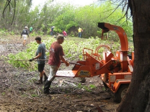 A wood chipper at Niumalu Beach Park processes the mangrove. Photo courtesy of Malama Hule'ia