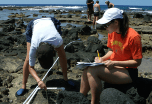 Students are seen collecting ecological data in the rocky intertidal zone for the OPIHI project. Photo courtesy of OPIHI