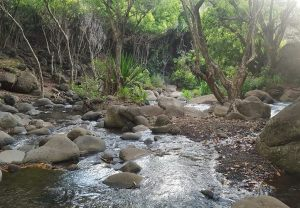 The stream at Kalalau Valley.