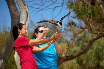 Island School teacher Rebecca Snowden and Tracy Anderson of SOS release a Newell's Shearwater. Photo courtesy of KESRP