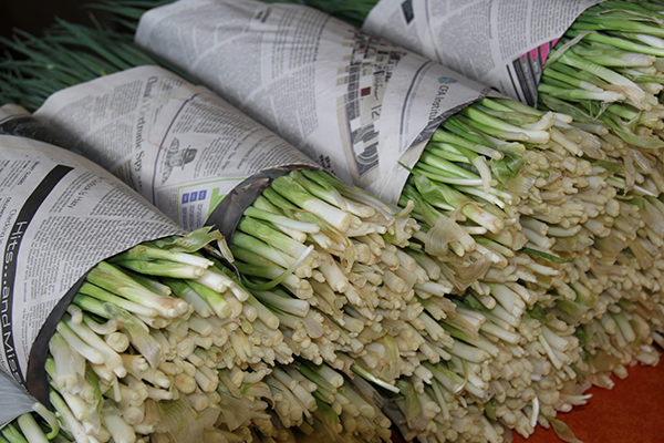 Bundles of green onions to be used in the saimin at Hamura. Green onions were likely a Filipino contribution to this Hawaiian multi-ethnic ramen bowl.