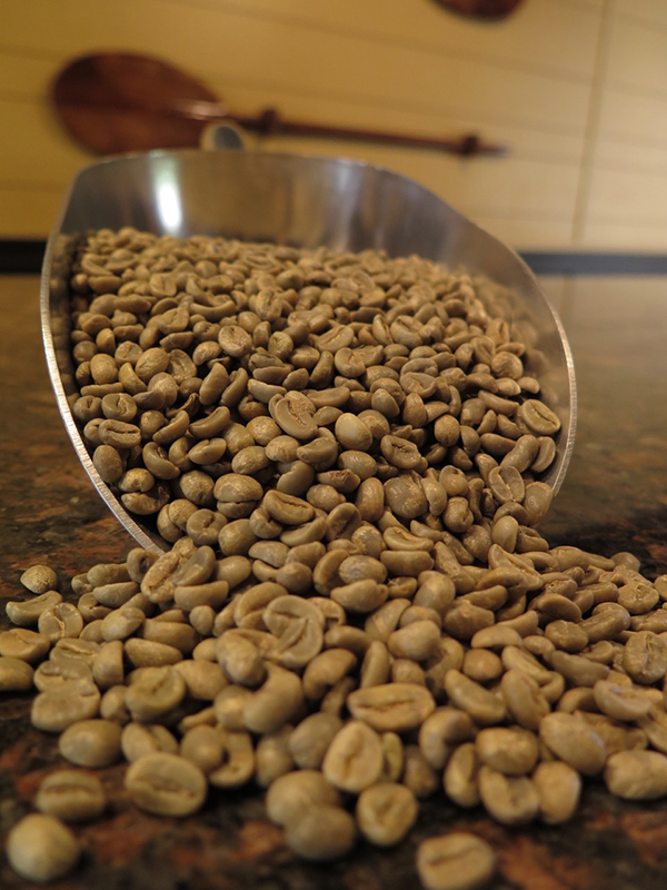This is how coffee beans start out after being harvested and processed and dried. The roasting process will deplete them of even more moisture and weight. Roasting them also releases the natural flavors unique to each growing region.