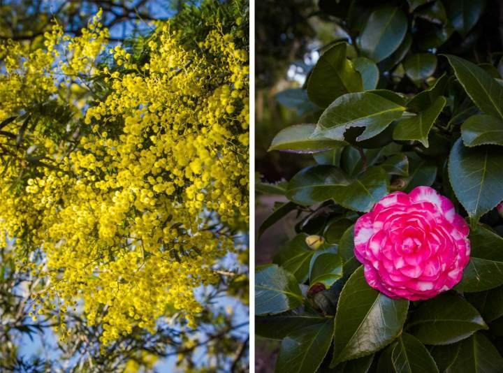 Royal Botanic Gardens Victoria | Melbourne, Australia | Fork in the Kitchen