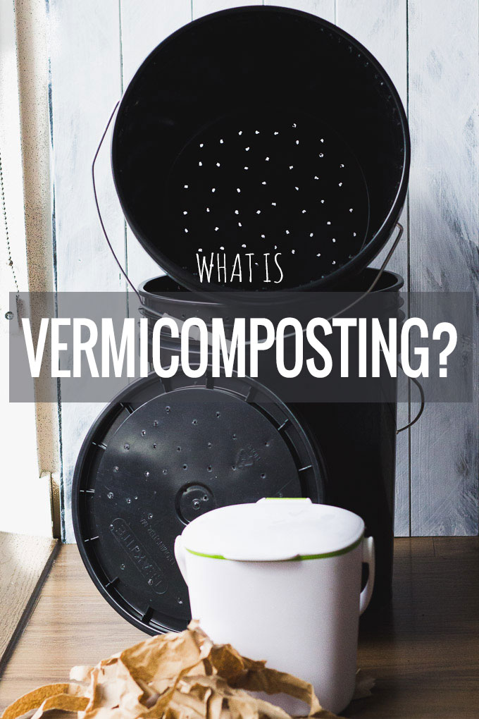 What is Vermicomposting? A journey to sustainability.   Fork in the Kitchen