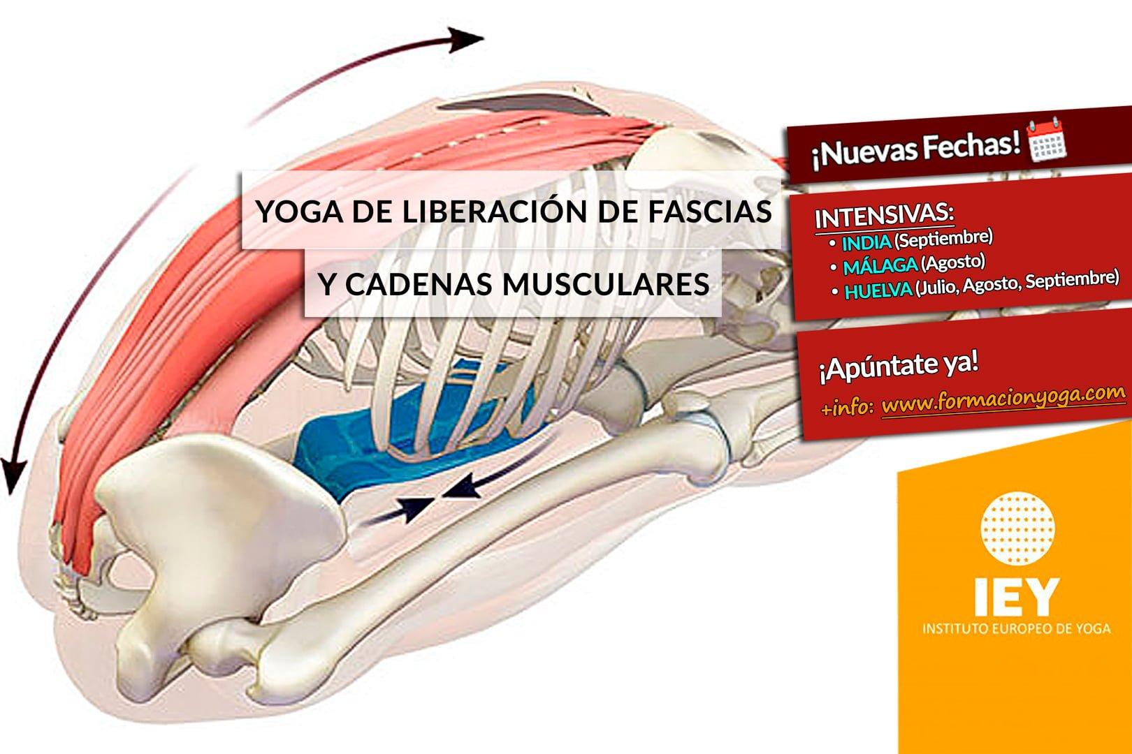 FORMACIÓN EN YOGA DE LIBERACIÓN DE FASCIAS Y CADENAS MUSCULARES ...