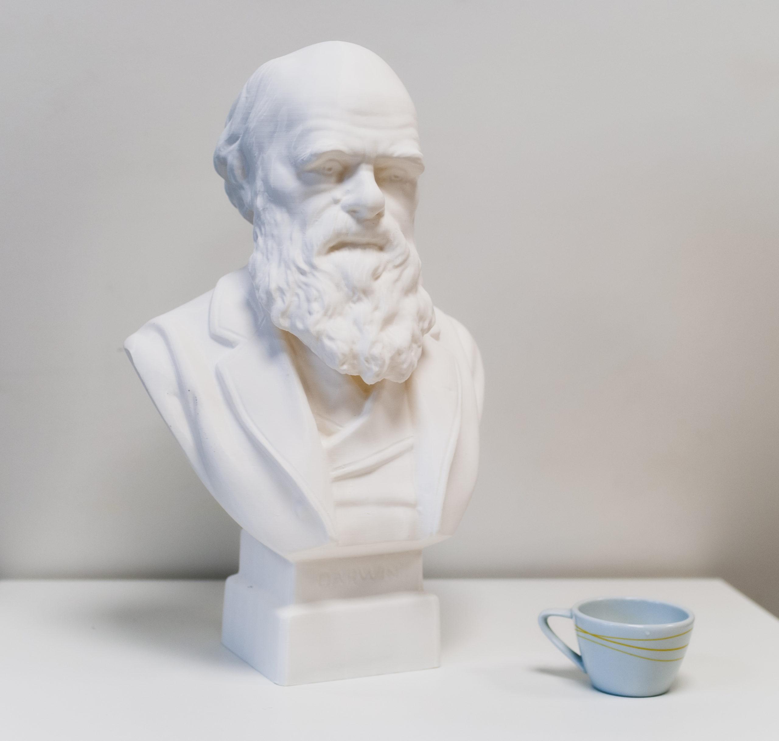 Darwin 3D print Buste