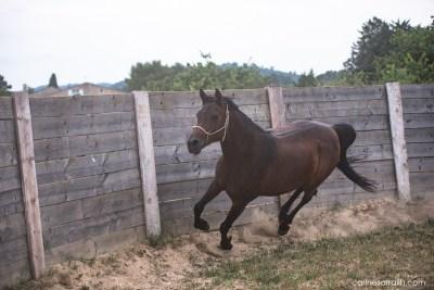 Les chevaux de Maria sortie en extérieur