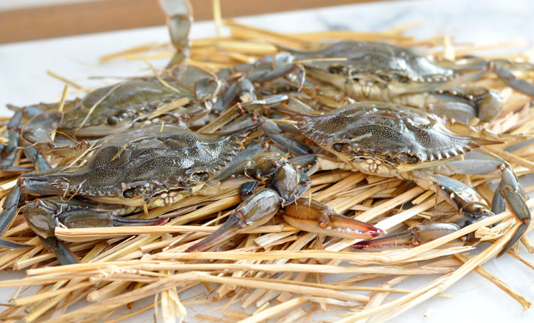 Live Soft Shell Crabs