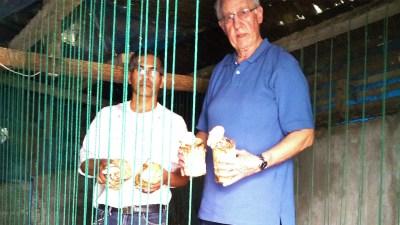 Harvesting Ganoderma Mushroom