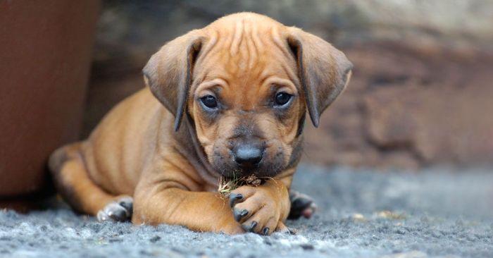 Consienta a sus mascotas - Formula Medica