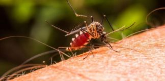 Malaria en Colombia - Formula Medica