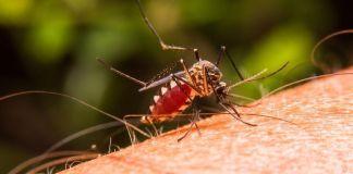 Malaria - Formula Medica