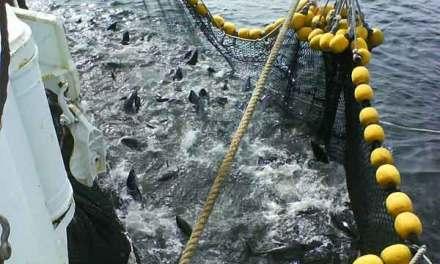 Se debe regular la captura de Atún