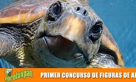 PRIMER CONCURSO DE FIGURAS DE ARENA