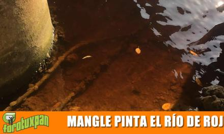Mangle originó coloración rojiza de Río Tuxpan