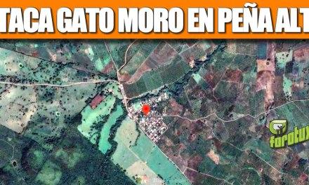 Ataca GATO MORO en PEÑA ALTA