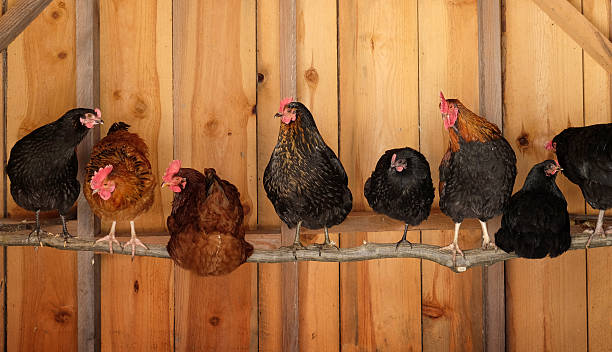 How to Winterize Your Coop