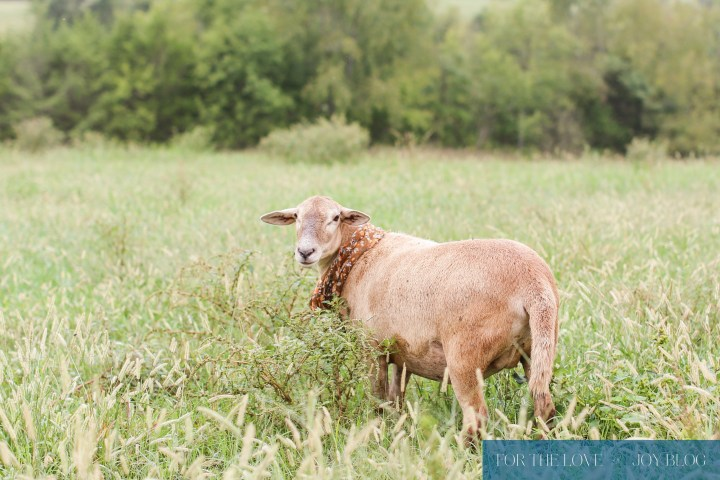 View More: http://faithphotography.pass.us/fall-farmhousetour-davis