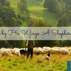 Covered By His Wings: A Shepherdess' Hope