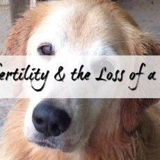 Infertility and the Loss of a Pet