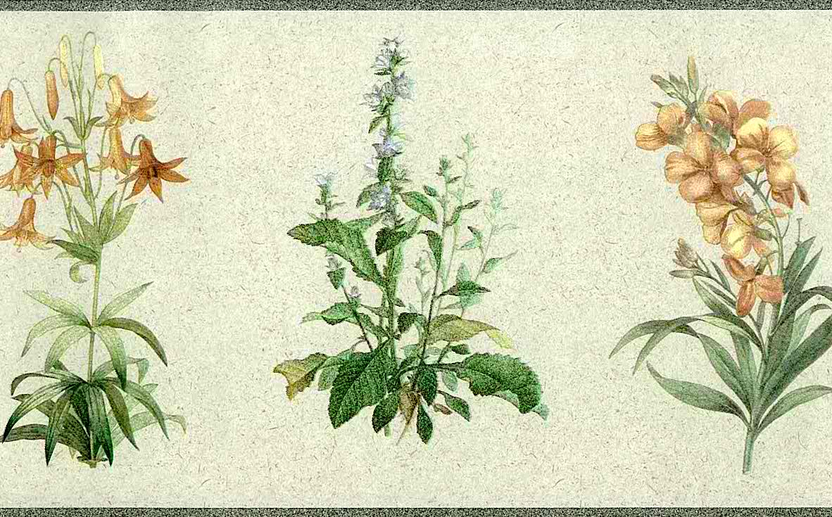 Botanical Floral Vintage Wallpaper Border Blue Yellow