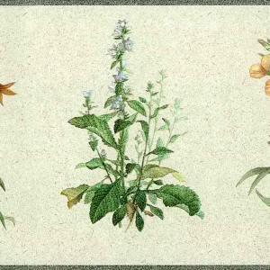 Botanical Floral Vintage Wallpaper Border Blue Yellow Kitchen FREE Ship