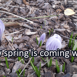 Writing Prompt for March 9: Signs of Spring