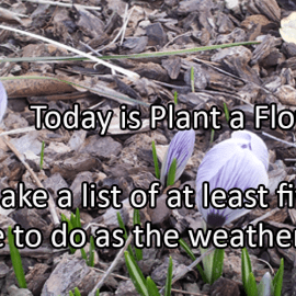 Writing Prompt for March 12: Plant a Flower