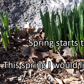 Writing Prompt for March 20: Spring